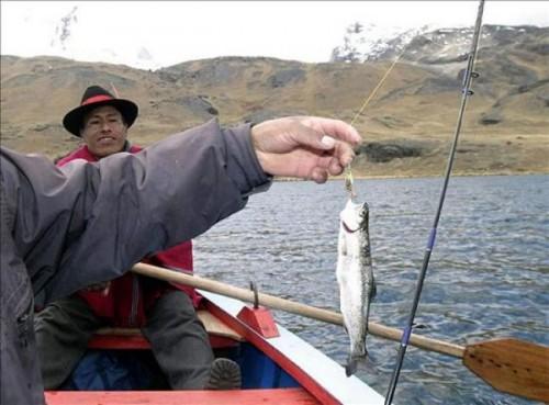 pez_titicaca