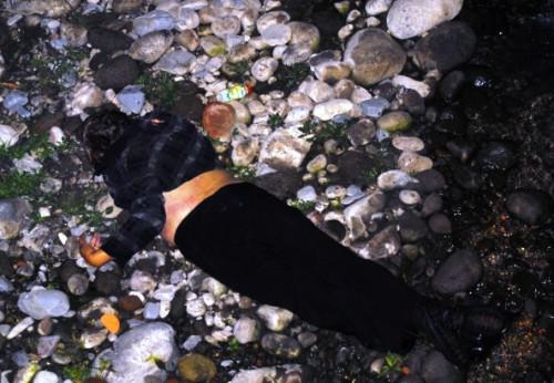 Cuerpo de mujer quedó destrozado por impacto contra las piedras.
