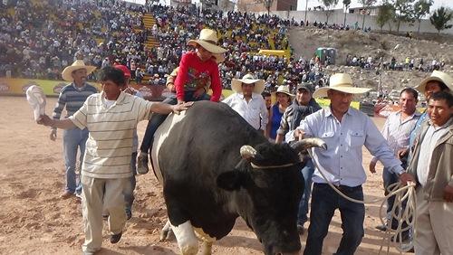 pelea-de-toros