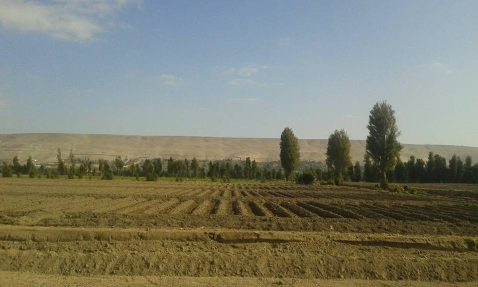 campos-labrados-y-sembrados