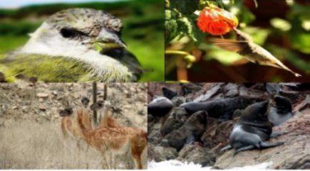 Proyectan Museo del patrimonio natural y Banco de Germoplasma de especies endémicas