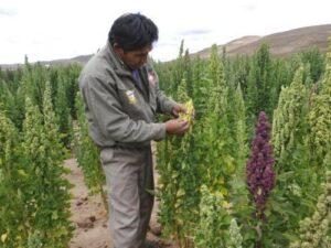 VIDEO. Cultivo de alimentos disminuirá por el Fenómeno de El Niño