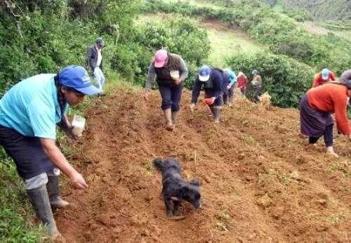 144137641371-Agricultura1