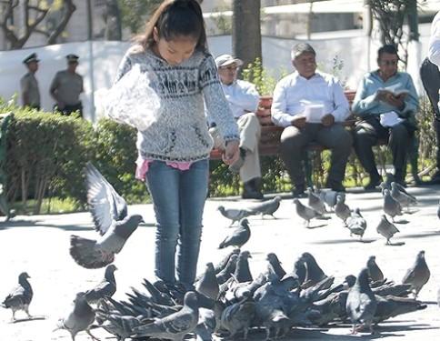 Noticia-15948-palomas_plaza_de_armas