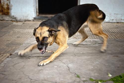 perro-con-rabia