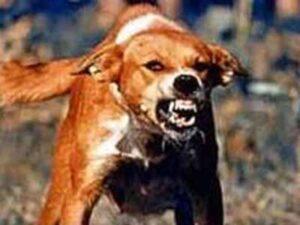 Alerta por detección de dos nuevos casos de rabia canina en Arequipa