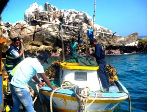 Oficiales de la Marina incautan 881 kilos de algas marinas cuya extracción está prohibida