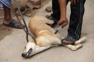 Vacunación masiva de canes se inició en Arequipa en prevención a la rabia