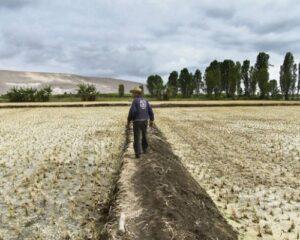 Debido a sequía, Agrobanco reprogramará deuda de agricultores del valle de Tambo