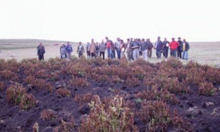 Heladas afectaron más de 700 hectáreas de cultivos en la región Arequipa
