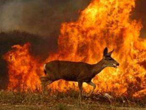Incendio forestal en Caylloma arrasó con 150 mil metros de tierra afectando biodiversidad
