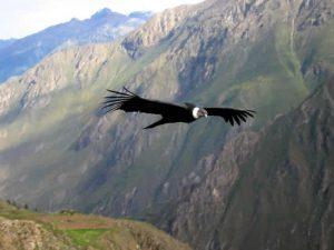 Con géiseres de Pinchollo promueven nueva ruta turística en el valle del Colca
