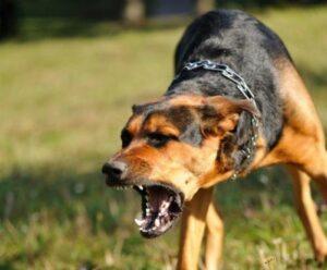 Se suman dos nuevos casos de rabia canina en Arequipa