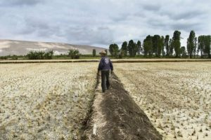 Consejo Regional aprobó declarar en emergencia el valle de Tambo por escasez de agua