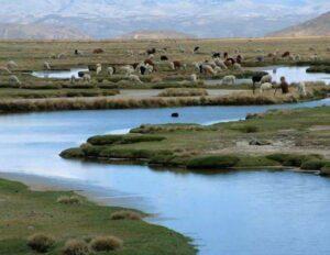 Carretera Interoceánica contamina Reserva Nacional de Salinas y Aguada Blanca