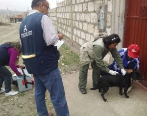 Encuentran irregularidades en adquisición de insumos durante emergencia por rabia canina