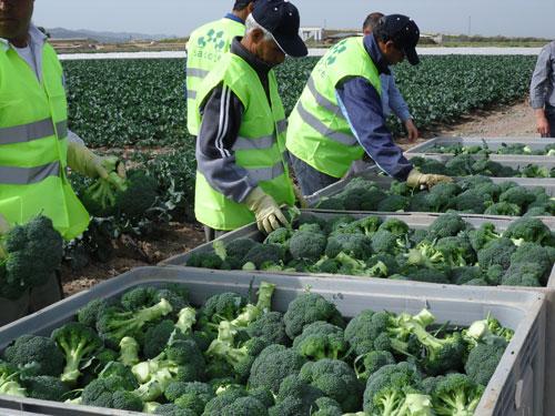 cultivos-de-exportacion