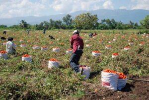 Exportadores piden al Gobierno Regional impulsar la agroexportación