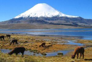 UNSA y Universidad Complutense de Madrid buscan proteger humedales de Caylloma