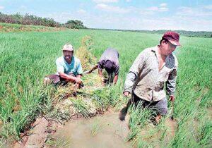 Lluvias afectaron cultivos del 10% de agricultores en la región