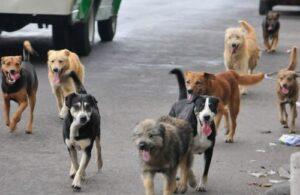 Se elevan a sietelos casos de rabia canina en la provincia de Arequipa
