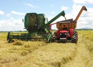Producción de arroz en el valle de Tambo caerá 30% este año por temporal