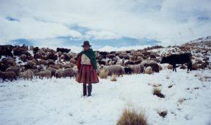 Distritos altos de Tacna, Puno y Arequipa con temperatura 10 bajo cero