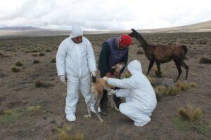Descartan  que cenizas del Sabancaya afecten terrenos de cultivo en la zona