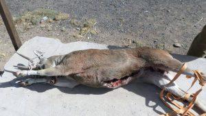 Detienen a cazadores de venados en la reserva de Salinas
