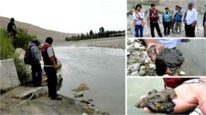 Relaves mineros vertidos al río Tambo provocan muerte de ganado y peces