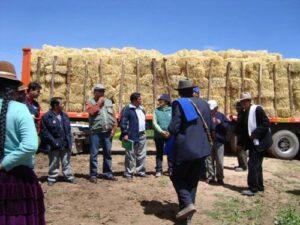 Destituyen funcionario GRA que compró 2 millones en pacas de heno sin orden