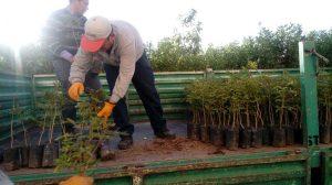 Forestarán terreno árido con plantones de Yara y Tara en distrito de Majes