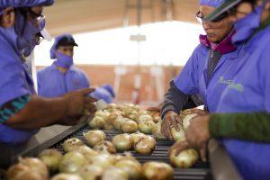 Exportaciones arequipeñas llegaron a 76 destinos en primer semestre