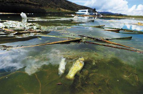 contaminación del Titicaca