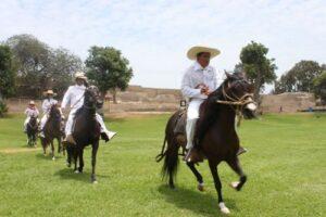 Lanzan el XI Concurso de Caballos de Paso para revalorar este equino