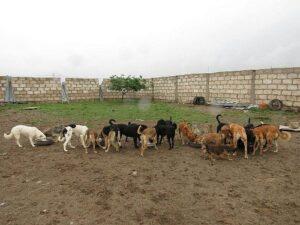 Treinta perros podrían ser desalojados si no pagan deuda por el albergue