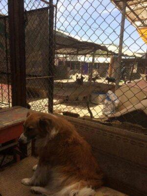220 perros vivían en pésimas condiciones en albergue de Socabaya