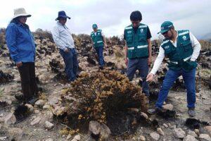 Incendio forestal consumió más de 500 hectáreas en distrito de Characato