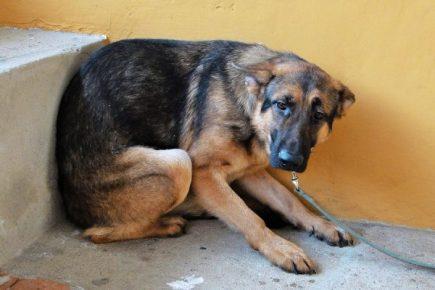 Un nuevo caso de rabia canina detectaron en Cerro Colorado