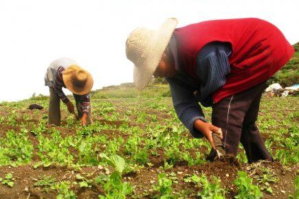 Traficantes habrían vendido terrenos de campesinos por 3 millones de soles
