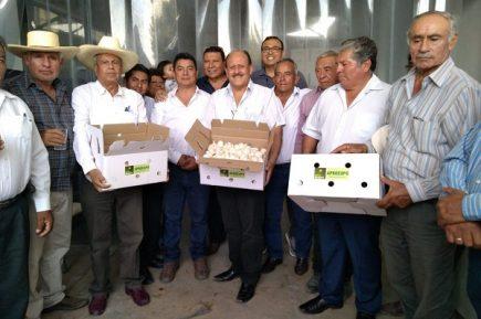 El ajo arequipeño ha causado sensación en el Brasil según exportadores