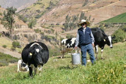 Arequipa: Ganaderos enfrentan a Leche Gloria y piden intervención de Cáceres Llica