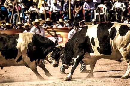 La pelea por los toros