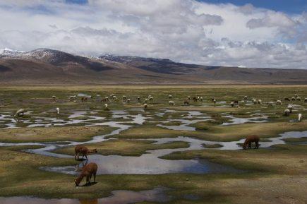 Humedales de Arequipa,  última esperanza para reducir el riesgo de inundaciones