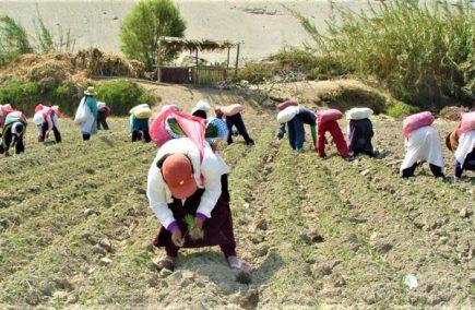Paro agrario: Arroceros de Camaná demandan apoyo de gobiernos locales y regionales
