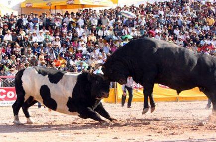 En torneo taurino piden acudir con camisetas blancas para rechazar prohibición de peleas de toros