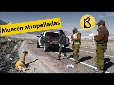 Reserva de Salinas y Aguada Blanca en emergencia
