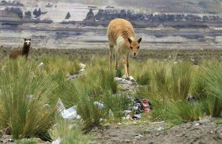 Reserva Salinas y Aguada Blanca: campaña de limpieza debido a la contaminación