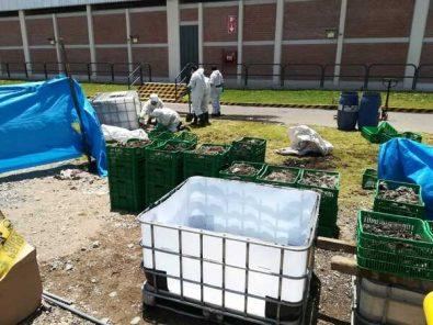 Arequipa: Producen biogás y biofertilizantes con residuos sólidos de fibra de alpaca