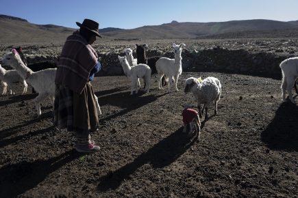 Heladas en el Altiplano: la lucha de comunidades indígenas frente al cambio climático